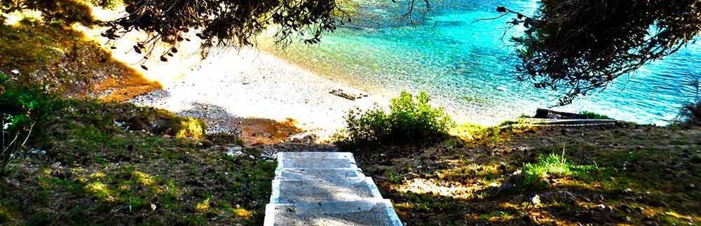 assos-beach-kefalonia-forest